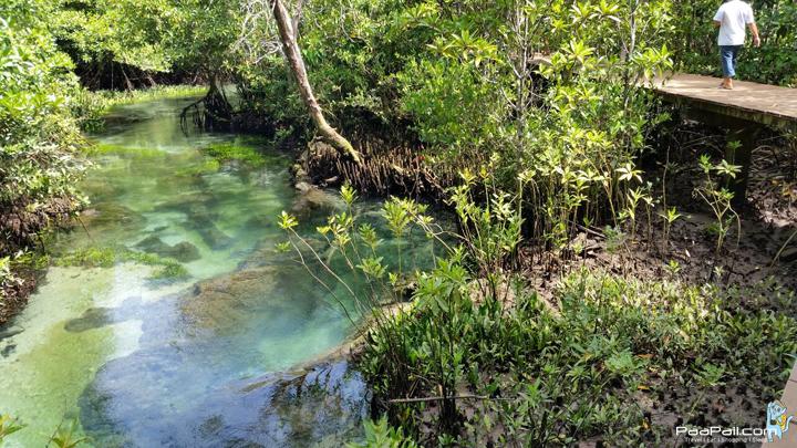 ป่าพรุ ท่าปอม คลองสองน้ำ