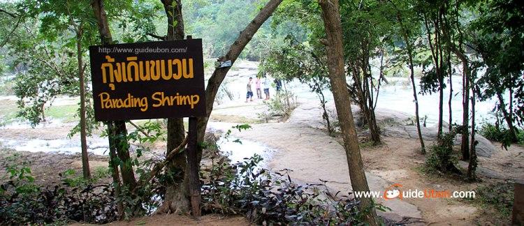 กุ้งเดินขบวน อันซีนไทยแลนด์